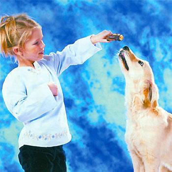 В Иваново стартовала акция «Человек собаке друг»