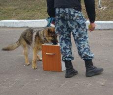 В Житомире кинологов готовят к Евро-2012