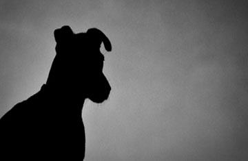 Петербуржцев спросили: «У вас собака какой породы?»