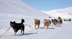 Самая протяженная в Евразии гонка на собачьих упряжках стартовала на Чукотке