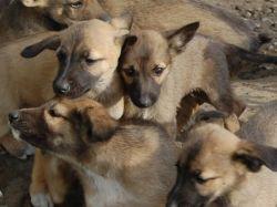 Жестокое убийство собаки вызвало широкий общественный резонанс в Тольятти