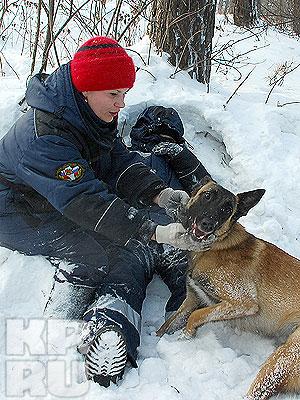 В Кемерове проходят тренировки поисковых собак