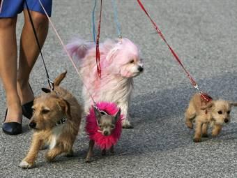 Немецким безработным предложили убирать за собаками