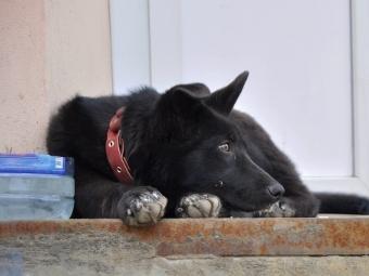 Пёс ждёт своего хозяина у магазина (Владимир)