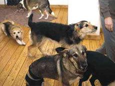 В Санкт-Петербурге пенсионерку заставили выселить из квартиры 40 собак