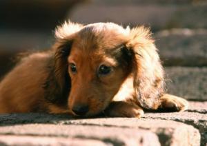 В Белграде вводят налог на животных (Сербия)