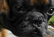 Жена израильского посла нелегально привезла в Египет свою собаку