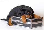 Аэропорт Бен-Гурион: собак и кошек будут просвечивать рентгеном