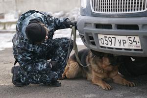 Скажи наркотикам «Гав!» (Новосибирск)
