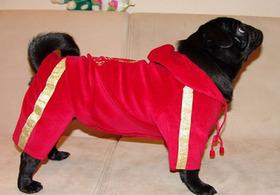 В Киеве выберут самую гламурную собаку!