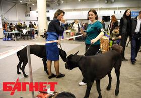 В Украину привезли рекордное количество талантливых собак