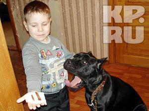 В Магнитогорске собака полгода жила с палкой в горле