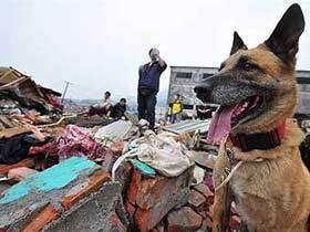 """""""Шестое чувство"""" животных: что же спасает их от катастроф?"""