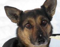 Преданная и ласковая собака Лиза ищет доброго хозяина (Москва)