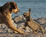 Животные тоже подразделяются на левшей и правшей