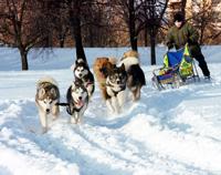 Для хозяев езда на санях – развлечение, для собак – спорт