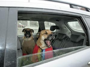 В Мурманске появилось такси для животных