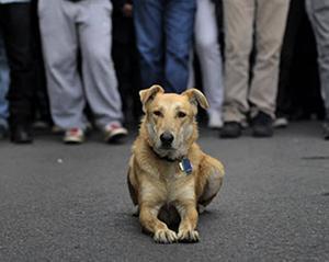 Собака - борец за справедливость (Греция)