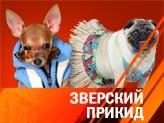 Гламур и глянец - в собачью жизнь