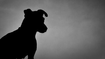 Участники акции в Уфе собрали более сотни подписей в защиту животных
