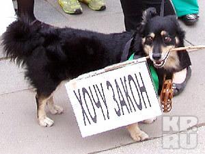 Самарцы выступили против убийства бездомных животных