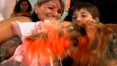 Собачья свадьба за 6000 фунтов (Бразилия)
