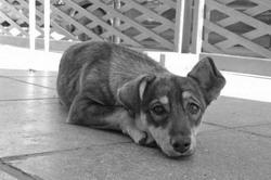У бездомных собак появится скорая помощь (Украина)
