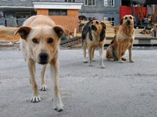 В Тюмени установят памятник-копилку бездомной собаке