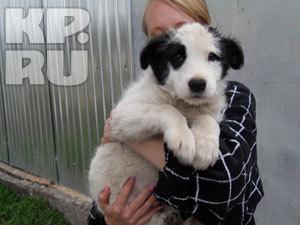 В Пятигорске открылся частный приют для домашних животных