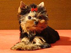 В Одессе пошла мода на гламурных собак
