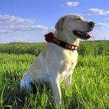 Шерифы полиции Америки заинтересованы в приобретении GPS трекеров для служебных собак