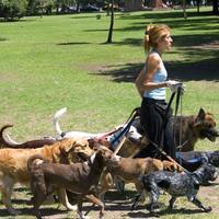 В субботу состоится гламурный праздник для собак (Эстония)