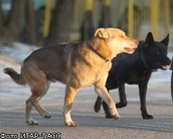 Собаки способны обнаружить рак у человека
