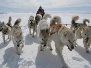 Гонки на ездовых собаках этой зимой во второй раз состоятся в Татарстане