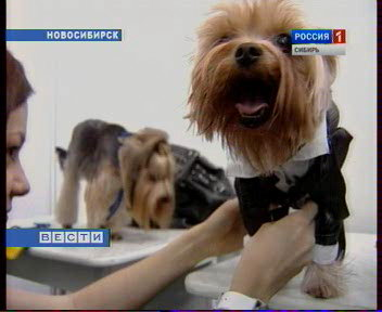 Модельный бизнес по-собачьи (Новосибирск)