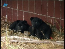 Приюта для бездомных животных в Петрозаводске не будет