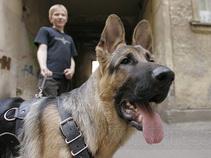 В Кривом Роге пьяным запретили выгуливать собак