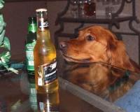 В Бельгии выпустили пиво для собак