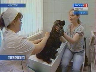 Иглорефлексотерапия для животных