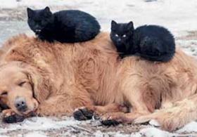 Бездомных животных защитит европейская конвенция (Украина)