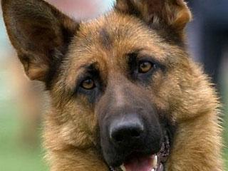 Депутаты Верховной Рады написали собакам правила поведения (Украина)