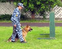 В Москве прошли соревнования служебных собак
