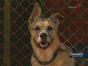 Власти Англии вводят ограничения на длину собачьего поводка