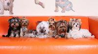 """""""Питч&гоу"""" – фестиваль собачьих талантов"""