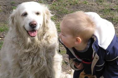 Собак посчитали жильцами квартир и повысили плату за коммунальные услуги (Сербия)