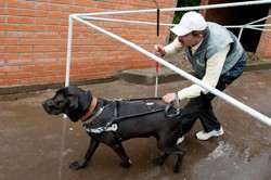 Уникальная школа собак-поводырей увеличит число выпускников