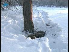 Защитники животных требуют привлечь к уголовной ответственности хозяина погибшей собаки (Карелия)