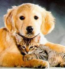 Собаки полезнее кошек