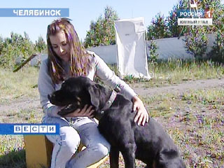 Детский сад для собак пользуется популярностью среди челябинцев