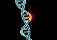Генетические заболевания домашних животных